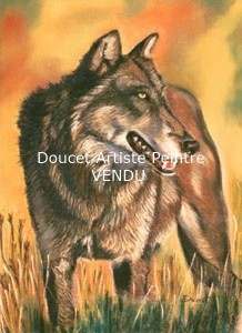 Loup pastel sec (vendu)