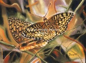 Papillon pastel sec (vendu)